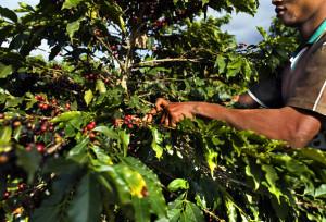 Caffè Sud America