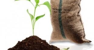 pianta caffe